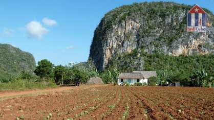 Landscape in Vinales Valley - Mogotes